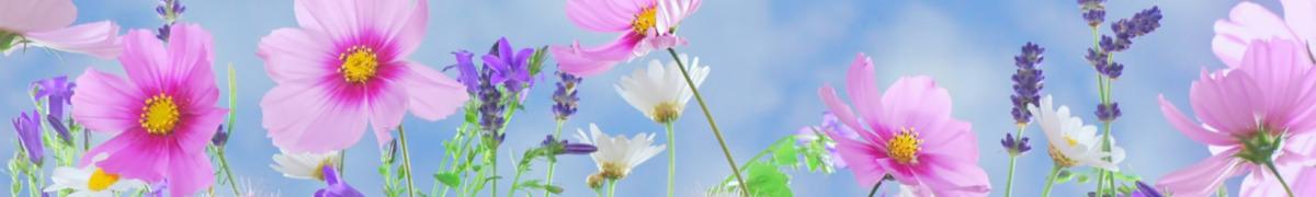 Blumen Manegold